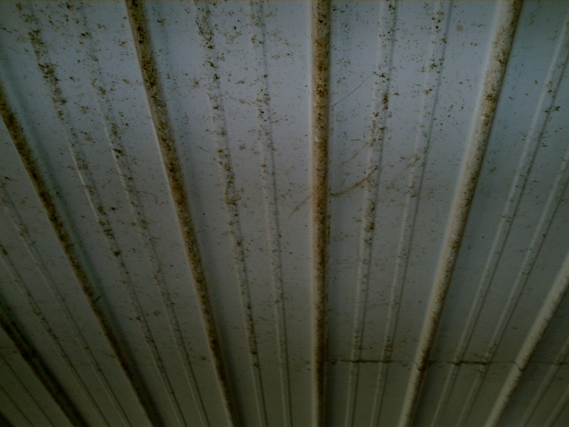 Ceiling picture